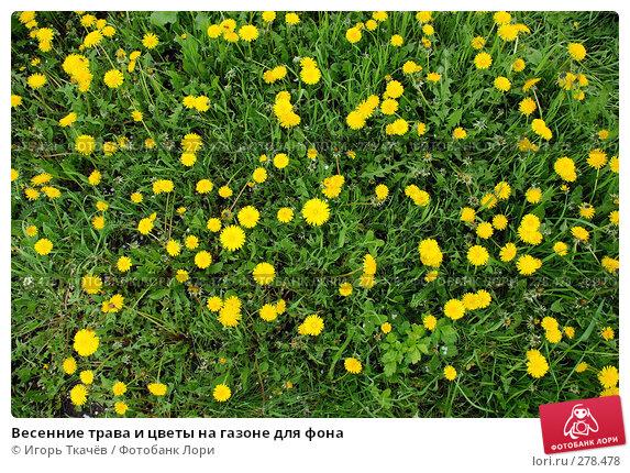 Купить «Весенние трава и цветы на газоне для фона», фото № 278478, снято 27 апреля 2008 г. (c) Игорь Ткачёв / Фотобанк Лори
