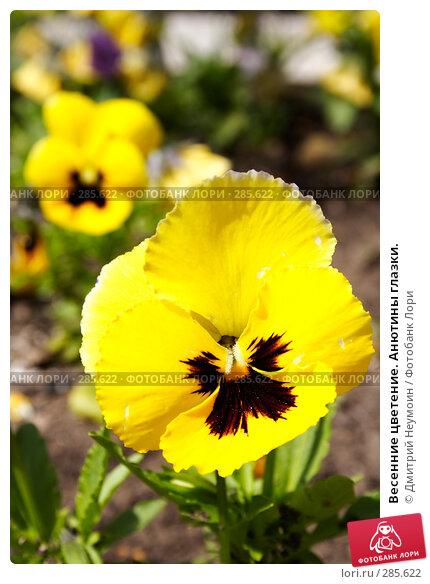 Купить «Весенние цветение. Анютины глазки.», эксклюзивное фото № 285622, снято 21 апреля 2008 г. (c) Дмитрий Неумоин / Фотобанк Лори