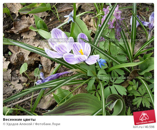 Весенние цветы, фото № 40598, снято 18 апреля 2007 г. (c) Удодов Алексей / Фотобанк Лори