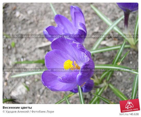 Весенние цветы, фото № 40638, снято 18 апреля 2007 г. (c) Удодов Алексей / Фотобанк Лори