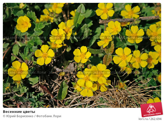 Купить «Весенние цветы», фото № 262694, снято 19 апреля 2008 г. (c) Юрий Борисенко / Фотобанк Лори