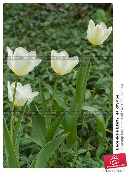 Весенние цветы на клумбе, фото № 249810, снято 12 апреля 2008 г. (c) Федор Королевский / Фотобанк Лори