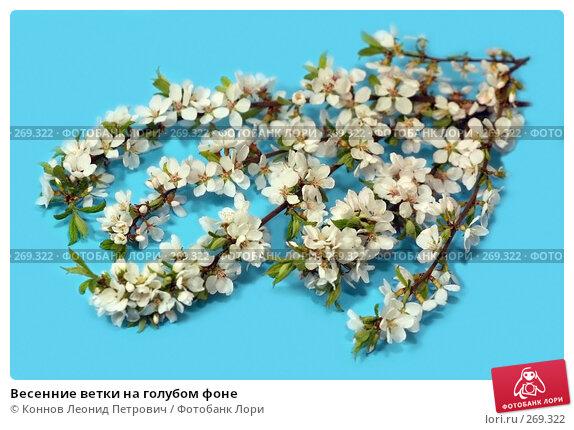 Весенние ветки на голубом фоне, фото № 269322, снято 24 апреля 2008 г. (c) Коннов Леонид Петрович / Фотобанк Лори