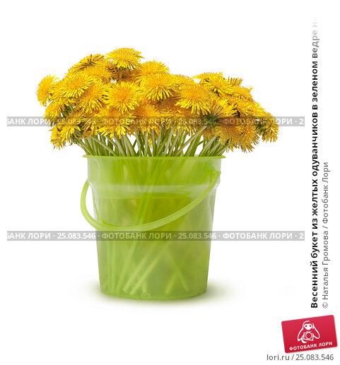 Весенний букет из желтых одуванчиков в зеленом ведре на белом фоне. Стоковое фото, фотограф Наталья Громова / Фотобанк Лори