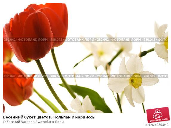 Купить «Весенний букет цветов. Тюльпан и нарциссы», фото № 280042, снято 3 мая 2008 г. (c) Евгений Захаров / Фотобанк Лори