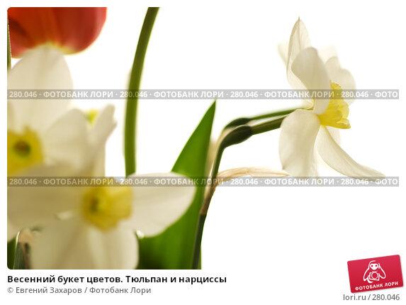 Весенний букет цветов. Тюльпан и нарциссы, фото № 280046, снято 3 мая 2008 г. (c) Евгений Захаров / Фотобанк Лори