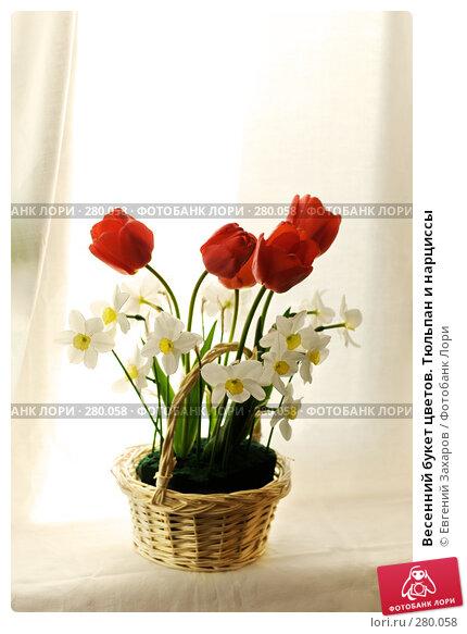 Купить «Весенний букет цветов. Тюльпан и нарциссы», фото № 280058, снято 3 мая 2008 г. (c) Евгений Захаров / Фотобанк Лори