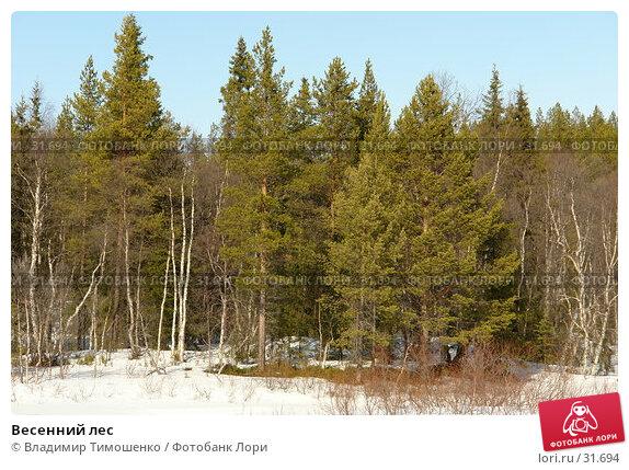 Весенний лес, фото № 31694, снято 10 апреля 2007 г. (c) Владимир Тимошенко / Фотобанк Лори