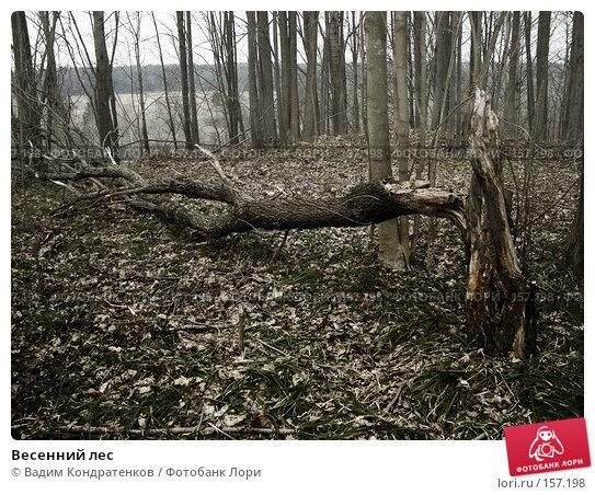 Весенний лес, фото № 157198, снято 25 января 2017 г. (c) Вадим Кондратенков / Фотобанк Лори