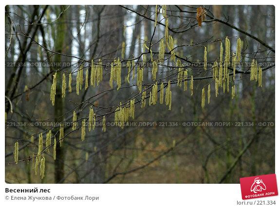 Весенний лес, фото № 221334, снято 9 марта 2008 г. (c) Елена Жучкова / Фотобанк Лори