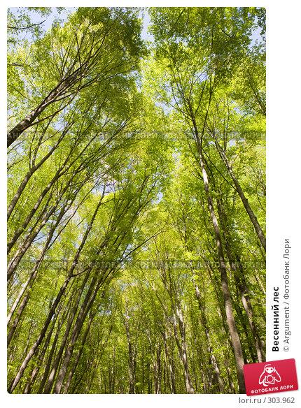 Весенний лес, фото № 303962, снято 26 апреля 2008 г. (c) Argument / Фотобанк Лори