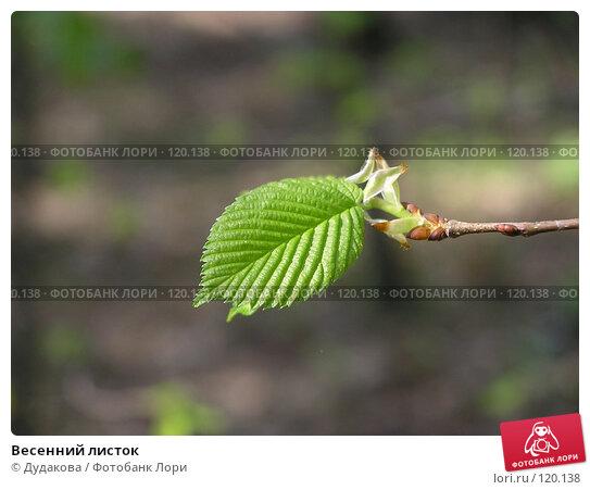 Весенний листок, фото № 120138, снято 5 мая 2004 г. (c) Дудакова / Фотобанк Лори