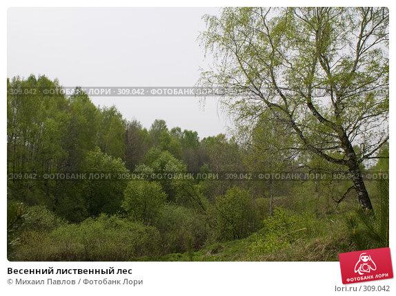 Купить «Весенний лиственный лес», фото № 309042, снято 19 мая 2008 г. (c) Михаил Павлов / Фотобанк Лори