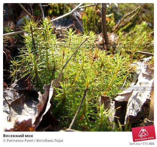 Купить «Весенний мох», фото № 111466, снято 6 мая 2007 г. (c) Parmenov Pavel / Фотобанк Лори