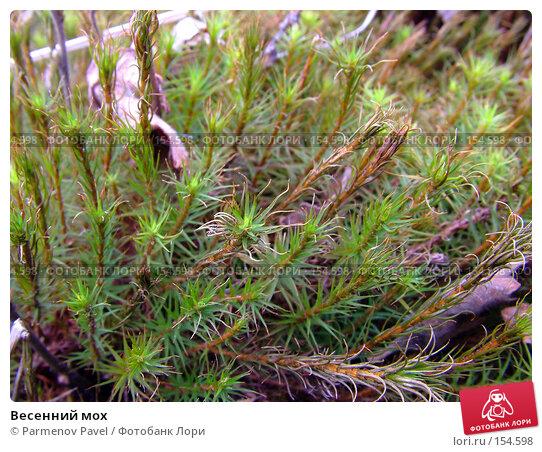 Купить «Весенний мох», фото № 154598, снято 30 апреля 2007 г. (c) Parmenov Pavel / Фотобанк Лори