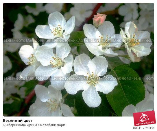 Весенний цвет, фото № 95434, снято 20 мая 2007 г. (c) Абарникова Ирина / Фотобанк Лори