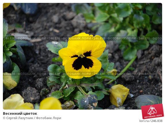Весенний цветок, фото № 246838, снято 9 апреля 2008 г. (c) Сергей Лазуткин / Фотобанк Лори