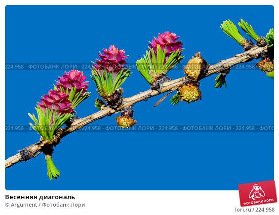 Весенняя диагональ, фото № 224958, снято 23 апреля 2007 г. (c) Argument / Фотобанк Лори