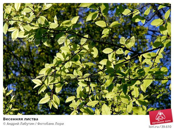 Весенняя листва, фото № 39610, снято 6 мая 2007 г. (c) Андрей Лабутин / Фотобанк Лори