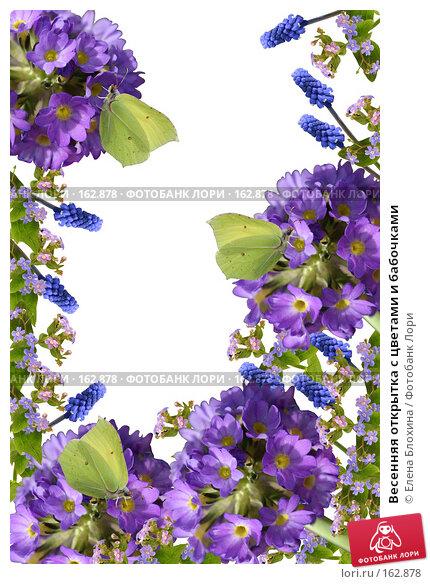 Весенняя открытка с цветами и бабочками, фото № 162878, снято 23 марта 2017 г. (c) Елена Блохина / Фотобанк Лори