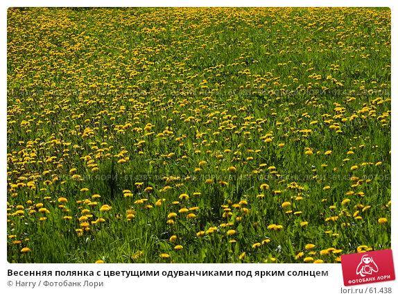 Купить «Весенняя полянка с цветущими одуванчиками под ярким солнцем», фото № 61438, снято 23 мая 2006 г. (c) Harry / Фотобанк Лори