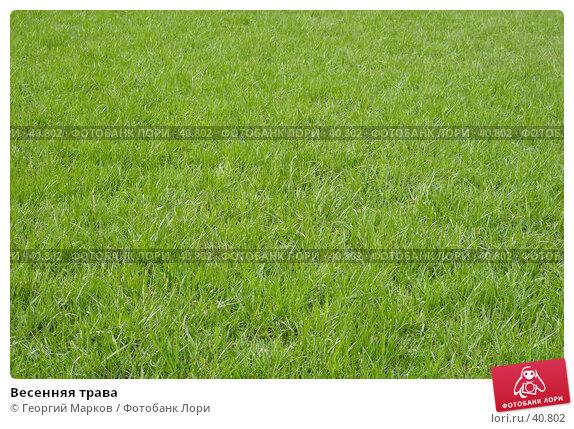 Весенняя трава, фото № 40802, снято 3 мая 2007 г. (c) Георгий Марков / Фотобанк Лори