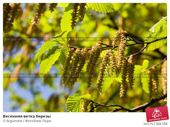 Весенняя ветка березы, фото № 304358, снято 24 апреля 2008 г. (c) Argument / Фотобанк Лори