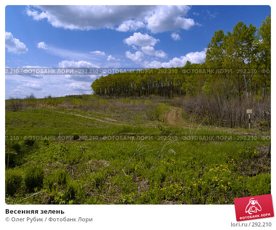 Купить «Весенняя зелень», фото № 292210, снято 15 мая 2008 г. (c) Олег Рубик / Фотобанк Лори