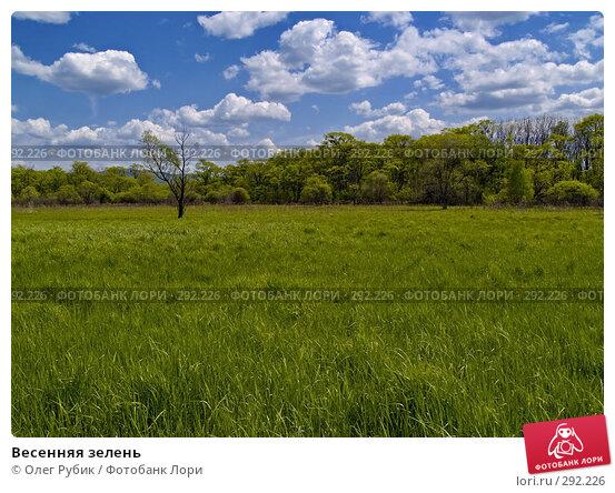 Весенняя зелень, фото № 292226, снято 15 мая 2008 г. (c) Олег Рубик / Фотобанк Лори