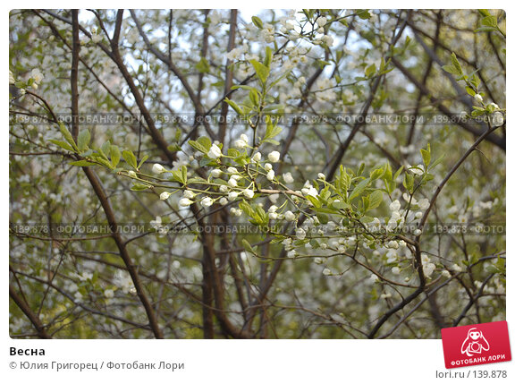 Весна, фото № 139878, снято 6 мая 2007 г. (c) Юлия Севастьянова / Фотобанк Лори