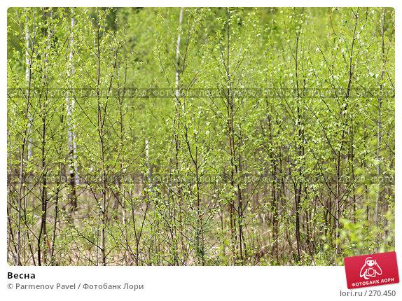 Весна, фото № 270450, снято 2 мая 2008 г. (c) Parmenov Pavel / Фотобанк Лори