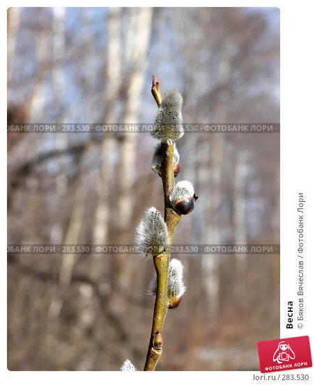 Весна, фото № 283530, снято 5 апреля 2008 г. (c) Бяков Вячеслав / Фотобанк Лори