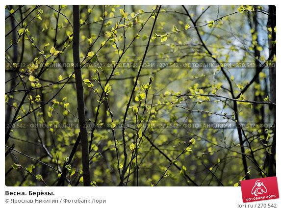 Весна. Берёзы., фото № 270542, снято 26 апреля 2008 г. (c) Ярослав Никитин / Фотобанк Лори