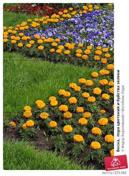 Купить «Весна,  пора цветения и буйства зелени», фото № 273582, снято 31 марта 2007 г. (c) Федор Королевский / Фотобанк Лори