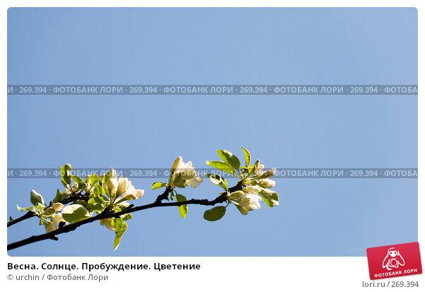 Весна. Солнце. Пробуждение. Цветение, фото № 269394, снято 29 апреля 2008 г. (c) urchin / Фотобанк Лори