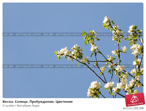 Весна. Солнце. Пробуждение. Цветение, фото № 269398, снято 29 апреля 2008 г. (c) urchin / Фотобанк Лори