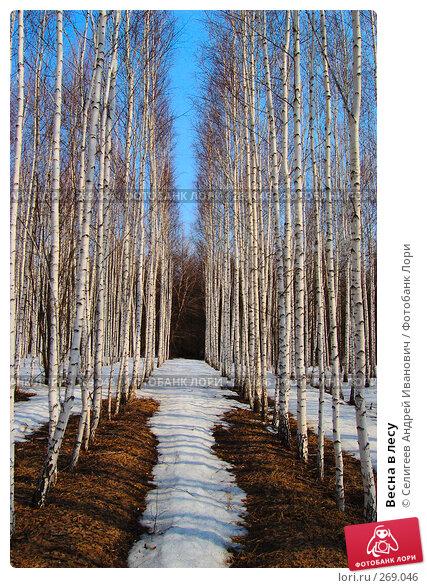 Весна в лесу, фото № 269046, снято 11 апреля 2008 г. (c) Селигеев Андрей Иванович / Фотобанк Лори