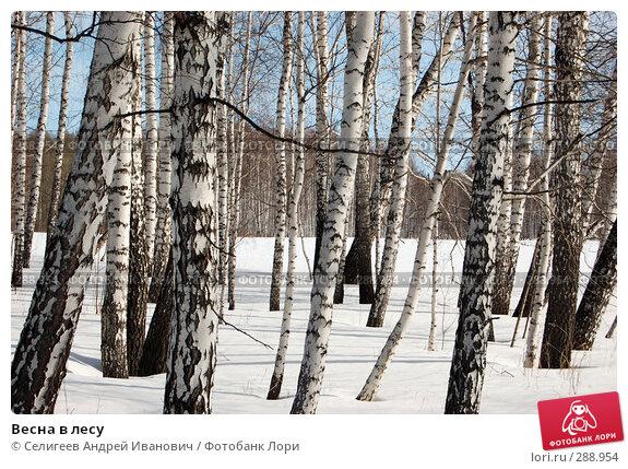 Весна в лесу, фото № 288954, снято 22 марта 2008 г. (c) Селигеев Андрей Иванович / Фотобанк Лори