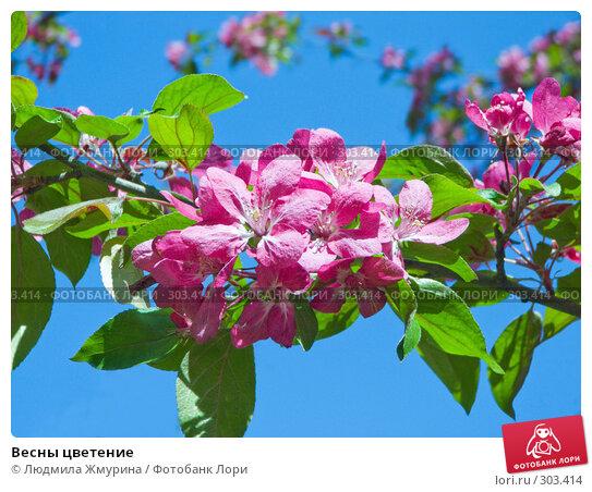 Весны цветение, фото № 303414, снято 25 апреля 2008 г. (c) Людмила Жмурина / Фотобанк Лори