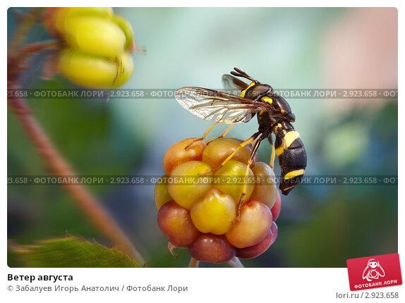 Купить «Ветер августа», фото № 2923658, снято 27 августа 2011 г. (c) Забалуев Игорь Анатолич / Фотобанк Лори