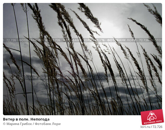 Купить «Ветер в поле. Непогода», фото № 72726, снято 7 января 2005 г. (c) Марина Грибок / Фотобанк Лори