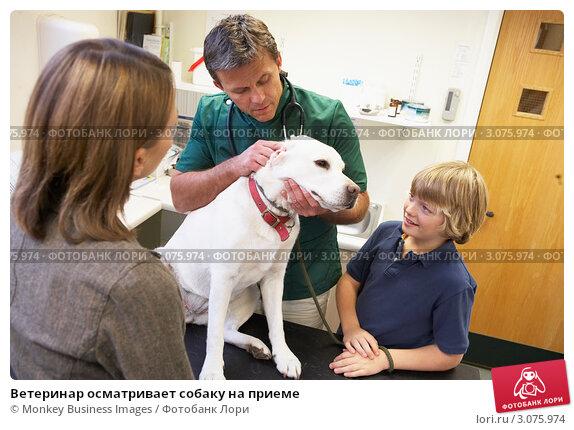 Купить «Ветеринар осматривает собаку на приеме», фото № 3075974, снято 17 ноября 2005 г. (c) Monkey Business Images / Фотобанк Лори