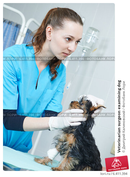 veterinary dating site The objective of this uniform labeling initiative is to promote standard labeling that will be uniformly understood and interpreted by the user of dairy and beef cattle veterinary pharmaceuticals.
