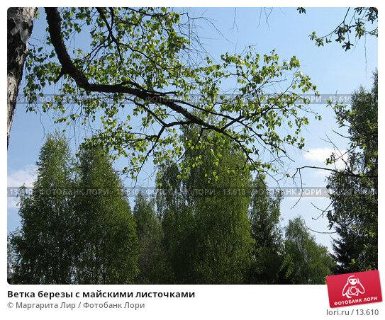 Ветка березы с майскими листочками, фото № 13610, снято 21 мая 2006 г. (c) Маргарита Лир / Фотобанк Лори