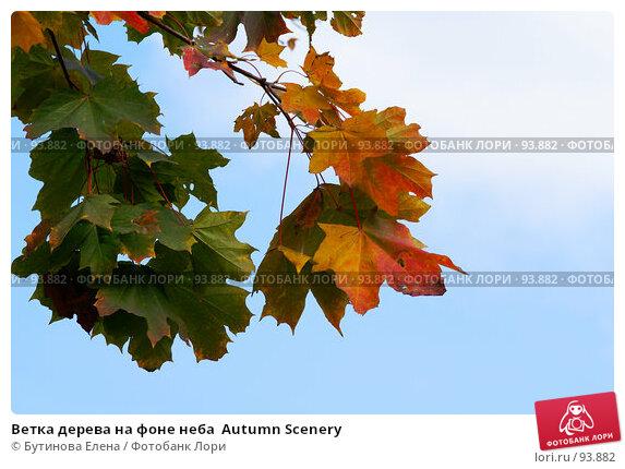 Ветка дерева на фоне неба  Autumn Scenery, фото № 93882, снято 4 октября 2007 г. (c) Бутинова Елена / Фотобанк Лори