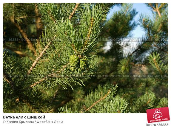 Ветка ели с шишкой, фото № 86338, снято 8 июля 2007 г. (c) Ксения Крылова / Фотобанк Лори