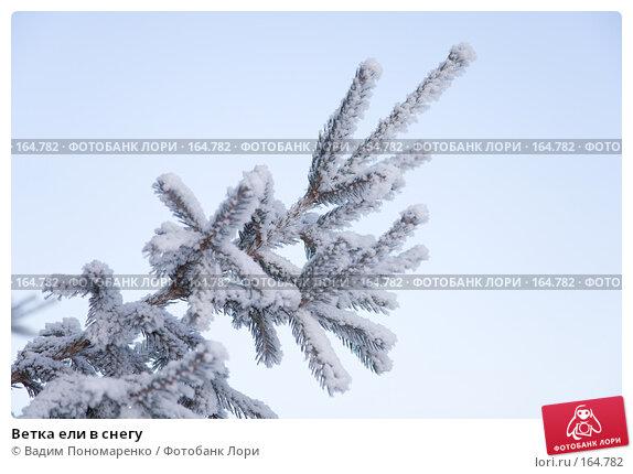 Ветка ели в снегу, фото № 164782, снято 1 декабря 2007 г. (c) Вадим Пономаренко / Фотобанк Лори