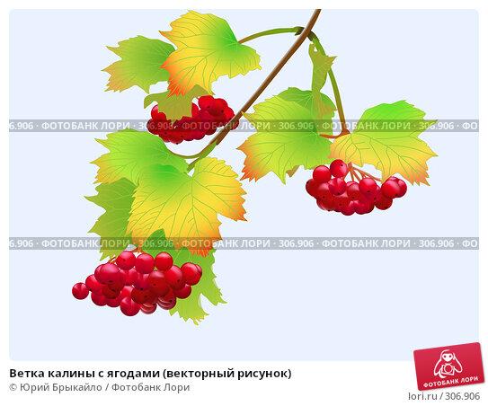 Ветка калины с ягодами (векторный рисунок), иллюстрация № 306906 (c) Юрий Брыкайло / Фотобанк Лори