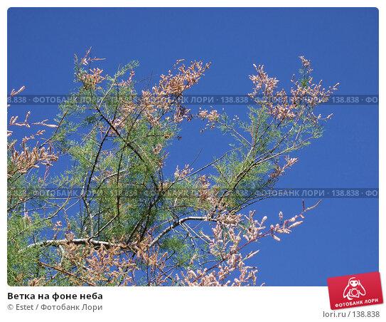Ветка на фоне неба, фото № 138838, снято 5 июля 2007 г. (c) Estet / Фотобанк Лори