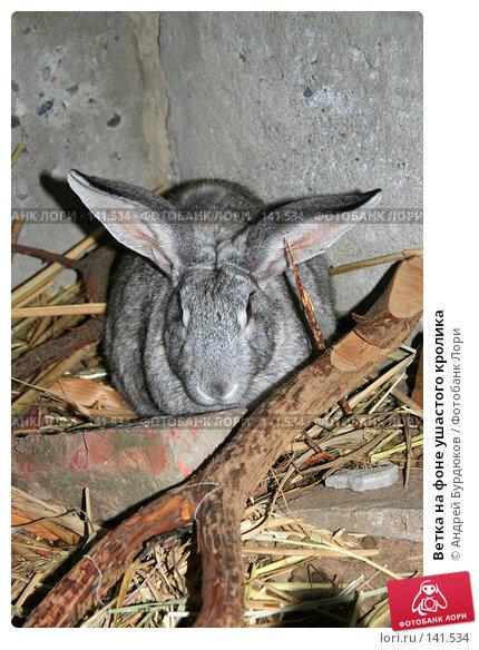 Купить «Ветка на фоне ушастого кролика», фото № 141534, снято 2 сентября 2005 г. (c) Андрей Бурдюков / Фотобанк Лори
